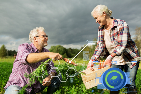 vecchiaia: coppia senior con la scatola di carote in azienda
