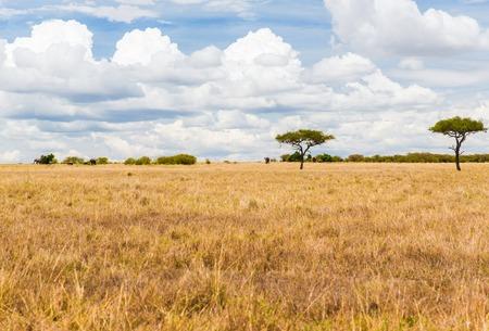 elephants in savannah at africa