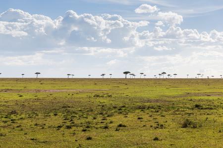 maasai mara: nature, landscape and wildlife concept - acacia tree in maasai mara national reserve savannah at africa Stock Photo
