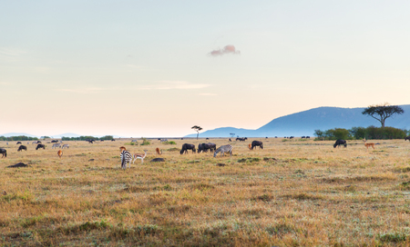 Groep herbivoordieren in de savanne in Afrika Stockfoto - 81459377