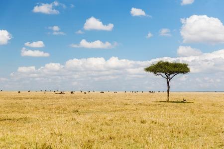 ツリー、アフリカ サバンナの動物の群れ 写真素材