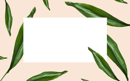 nature, organic and template concept - green leaves over white blank rectangular space on beige background Stock fotó