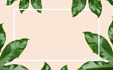 nature, organic and template concept - green leaves with blank space inside rectangular frame over beige background
