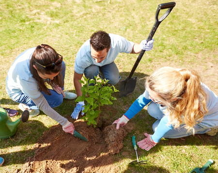 volunteering, charity, people and ecology concept - group of happy volunteers planting tree in park