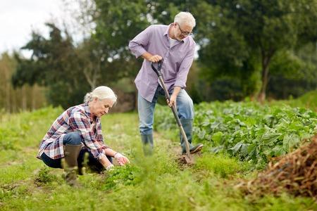 landbouw, tuinieren, landbouw en mensenconcept - gelukkig hoger paar die in tuin bij de zomerlandbouwbedrijf werken