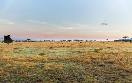dier, aard en het wildconcept - groep verschillende herbivoor dieren in maasai mara nationale reservesavanne in Afrika