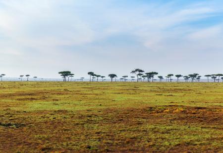 アフリカのサバンナでアカシアの木 写真素材