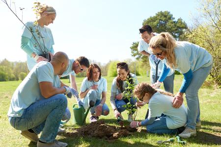 group of volunteers planting tree in park photo