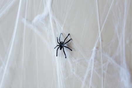 halloween decoration of black toy spider on cobweb
