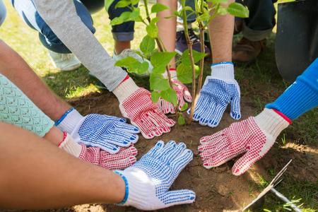 selfless: group of volunteers hands planting tree in park