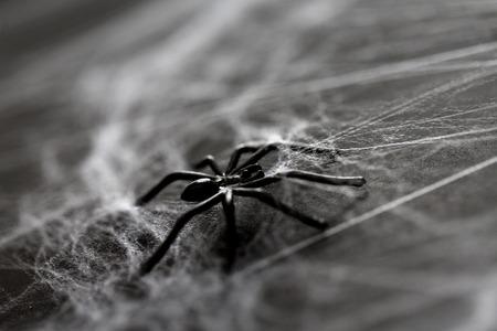 Halloween-decoratie van zwarte stuk speelgoed spin op spinneweb