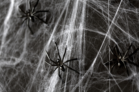 halloween decoration of black toy spiders on web Imagens
