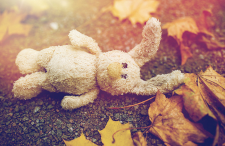 toy rabbit and autumn leaves on road or ground Stock Photo