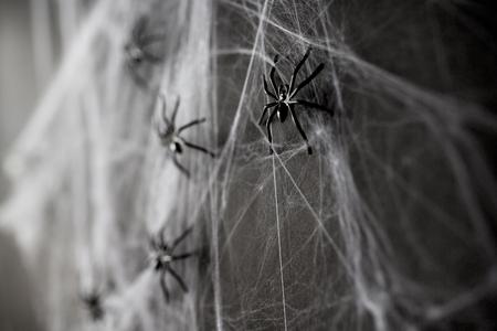 웹상에서 검은 장난감 거미의 할로윈 장식