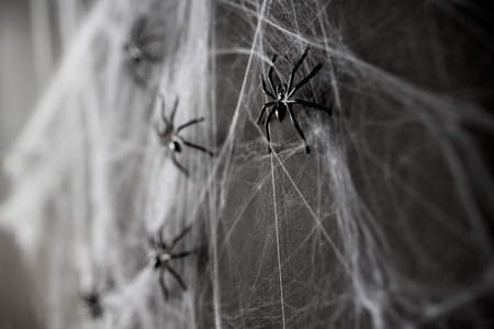 halloween decoration of black toy spiders on web Zdjęcie Seryjne - 84856900