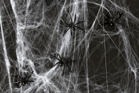 halloween decoration of black toy spiders on web Stock Photo