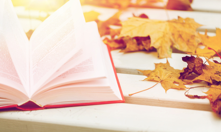 공원 벤치에 책과 단풍을 엽니 다. 스톡 콘텐츠