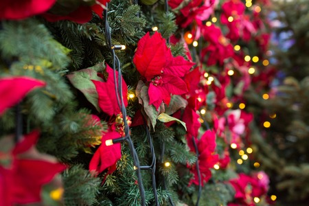holidays and decoration concept - close up of christmas tree with poinsettia flower decoration and garland 版權商用圖片