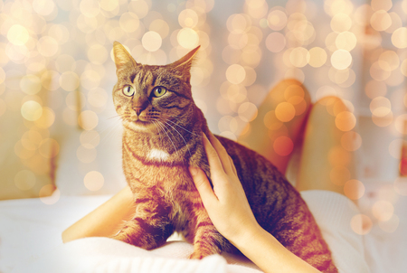 young woman with cat lying in bed at home