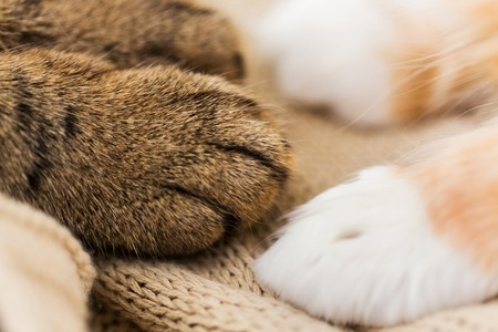 close up of paws of two cats on blanket Reklamní fotografie - 93708240