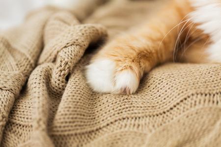 Stretta di zampa di gatto rosso sulla coperta a maglia Archivio Fotografico - 94039858