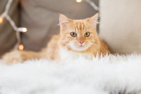 rode Cyperse kat op sofa met schapenvacht thuis Stockfoto