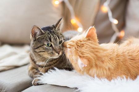 twee katten liggend op de bank met schapenvacht thuis