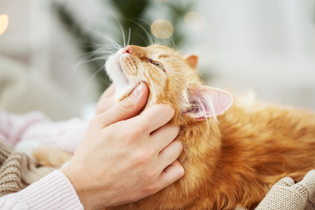 close up of owner with red cat in bed at home
