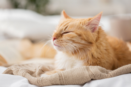 red cat sleeping on blanket at home in winter