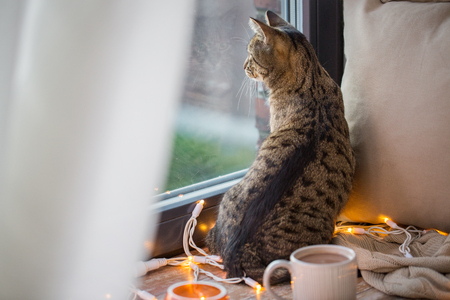 tabby cat looking through window at home