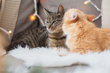 huisdieren, Kerstmis en hygge concept - twee katten liggend op de bank met schapenvacht thuis in de winter