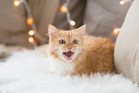 pets, christmas and hygge concept - red tabby cat mewing on sofa with sheepskin at home in winter