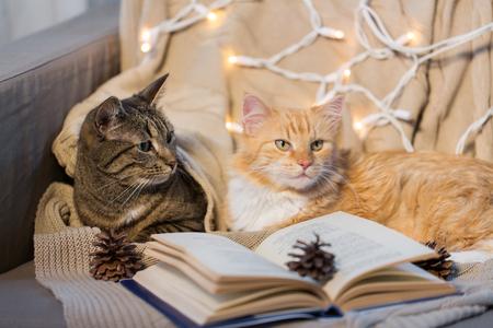 huisdieren, Kerstmis en hygge concept - twee katten die op bank met boek thuis in de winter liggen