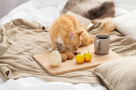pets, hygge and domestic animal concept - red tabby cat sniffing food on bed at home