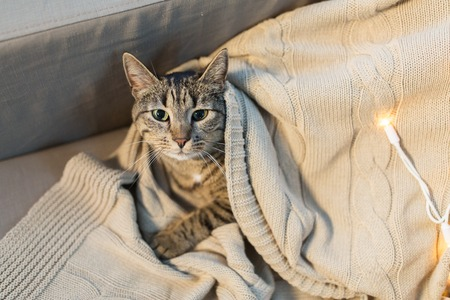 tabby cat lying on blanket at home in winter Фото со стока