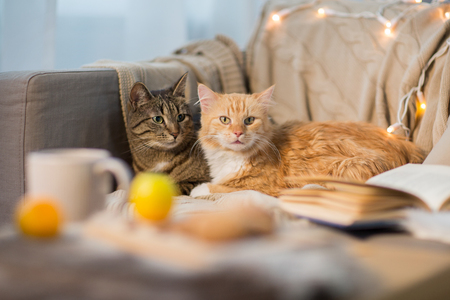two cats lying on sofa at home Reklamní fotografie - 96033715