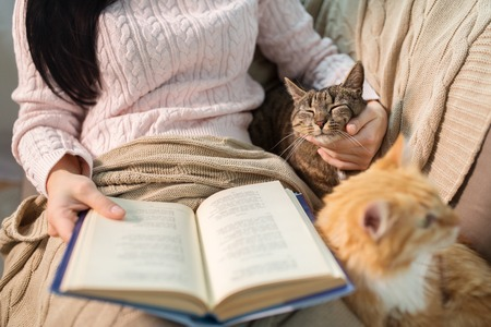 red and tabby and owner reading book at home