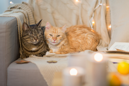 two cats lying on sofa at home Reklamní fotografie - 96348123