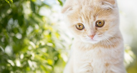 close up of kitten over natural background