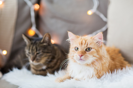 two cats lying on sofa with sheepskin at home Stock Photo