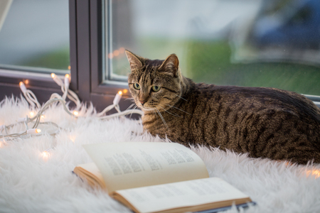 tabby cat lying on window sill with book at home Stock Photo