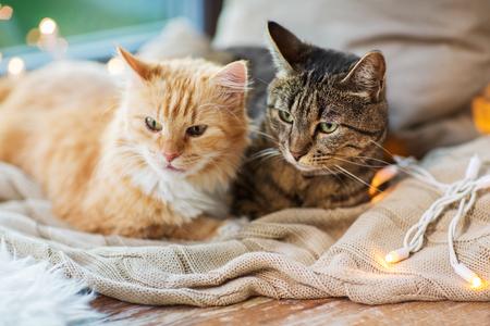自宅で毛布で窓のシロンに横たわっている2匹の猫 写真素材
