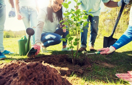 group of volunteers hands planting tree in park