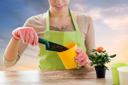 gardening and people concept - close up of female gardener hands with soil in scoop planting rose to flower pot over sky background Banco de Imagens