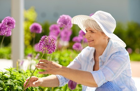 gardening and people concept - happy senior woman with allium flowers at summer garden Stock fotó