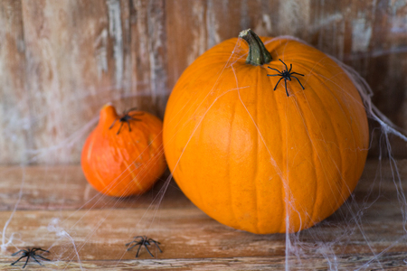 halloween pumpkins with spiders and cobweb