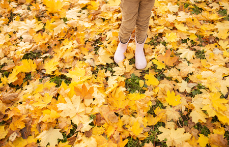 kid legs in rubber boots on maple leaves in autumn Stock Photo