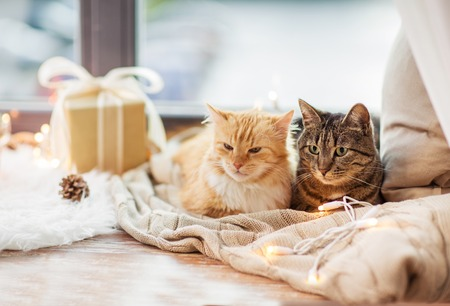 cats lying on windowsill with blanket at christmas Reklamní fotografie