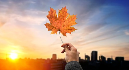 season, nature and people concept - close up of woman hand holding autumn maple leaves over sunset in city of tallinn background