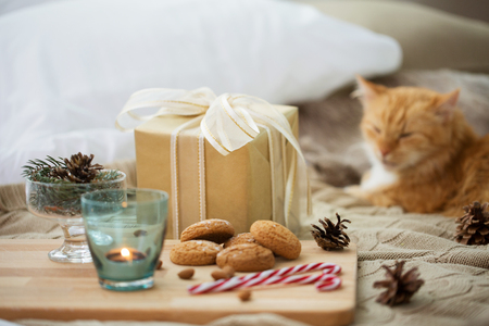 christmas gift, cookies and cat lying in bed